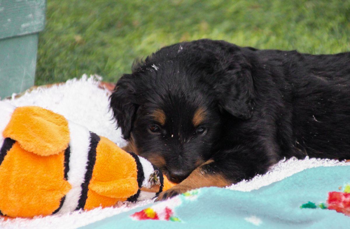 Pups 3 weken oud!